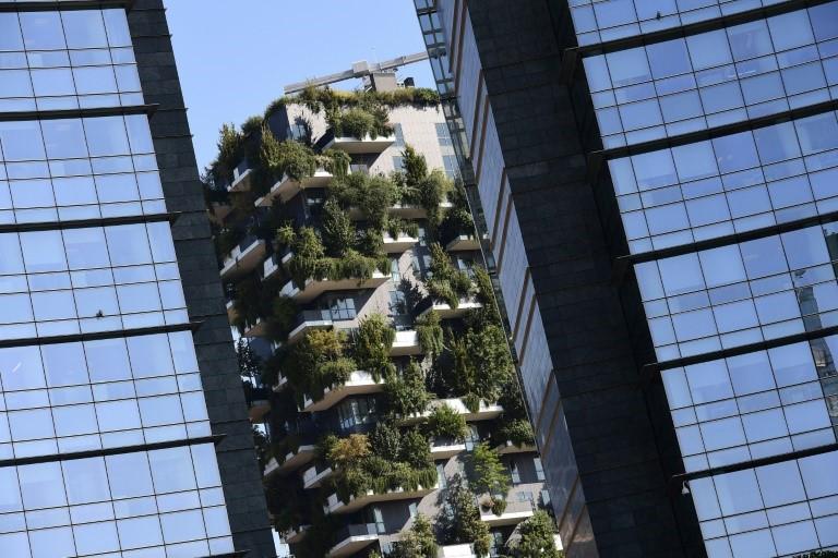 Mur végétal immeuble